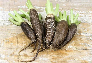 Редька Radish  Long Black Spanish