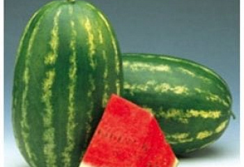 Арбуз Watermelon Farao F1