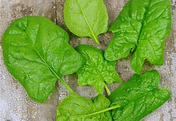 Шпинат Spinach Giant Noble