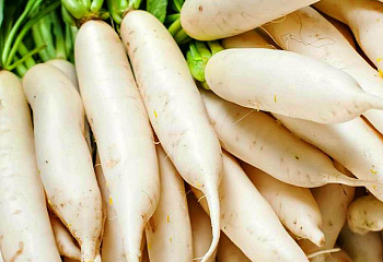 Дайкон Daikon Favorit